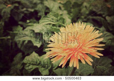 Retro image flowers on vintage paper background