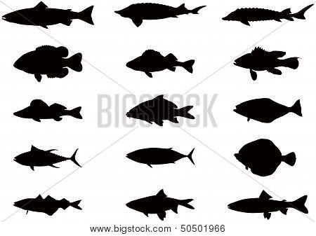 Silhouette Of Sea And River Fish