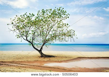 Tree At Beach