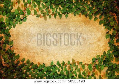 Green Fresh Leaves Frame On Old Paper Vintage