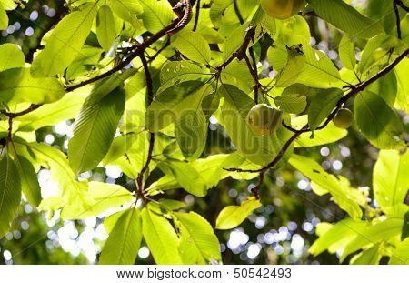 Sri Lanka. Royal Botanic Gardens. Different Types Of Trees