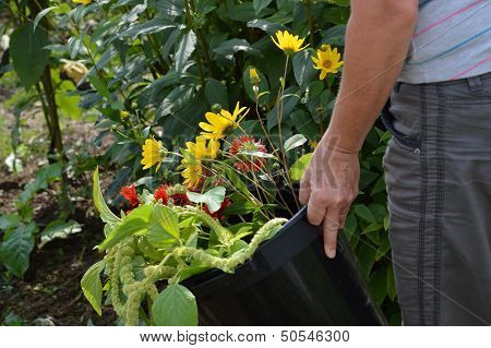 Cutting Flowers For A Bouquet