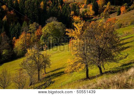 Sloped Meadow In Autumn