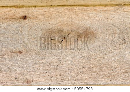 Plank In Young Yellow Wood Macro