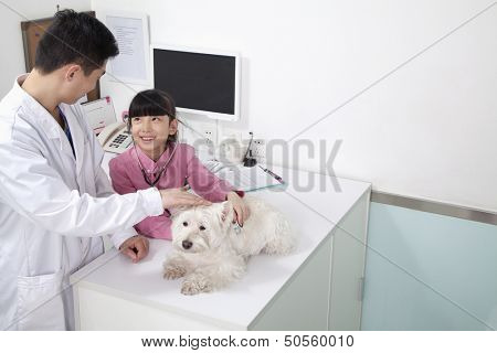 Girl with pet dog in veterinarian's office