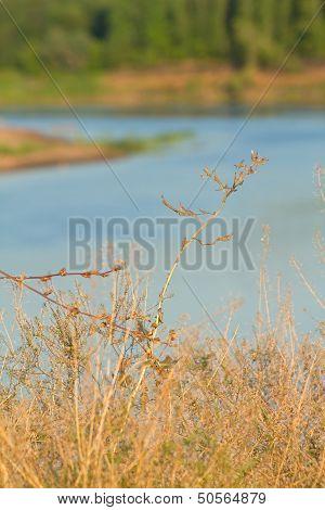 Plant Against River