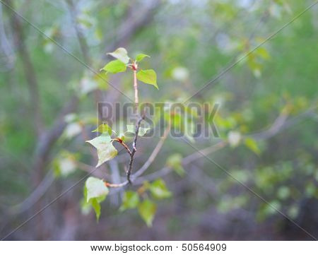 Branch With Green Leaves