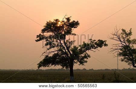Sunset With Silhuette Of Trees