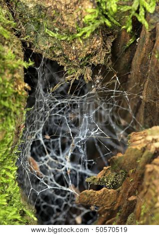 Chaotic spider web