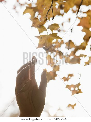Human hand reaching for a leaf in the autumn, brightly lit