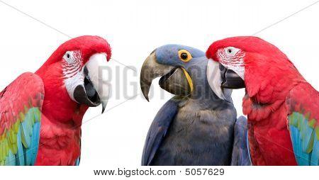 Papagei-Sitzung