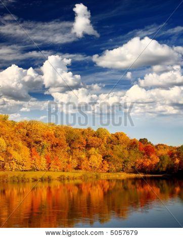 The Foliage Scenery