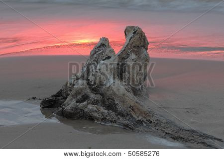Driftwood At Sunset