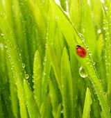 Close-up Shot Of Green Grass With Rain Drops On It