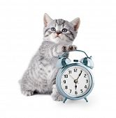 stock photo of pussy  - adorable kitten with alarm clock - JPG