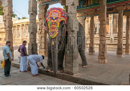 Elephant Of Meenakshi Temple