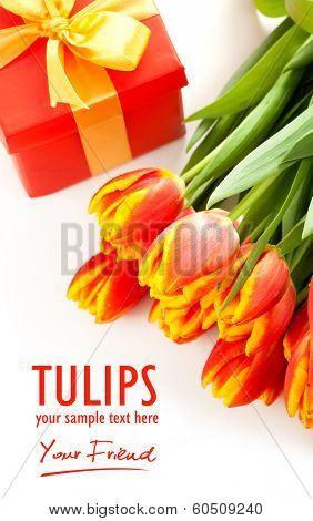 Red tulips no the black background - isolated text
