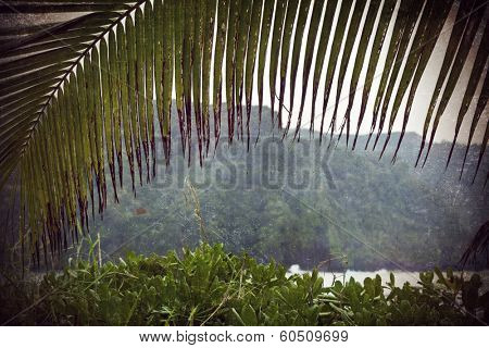 Moody shot of the Maui Mountains through a palm frond