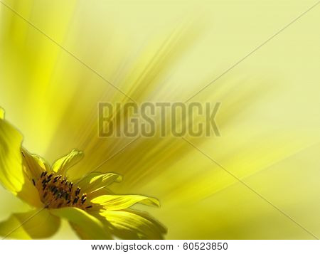 Sunflower and rays.