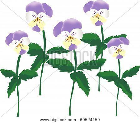 Viola Tricolor.eps
