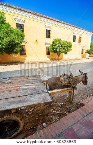 Donkey Cart And Building