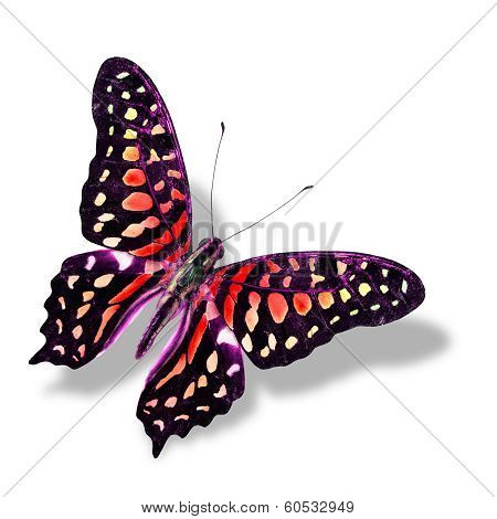 Colorful Red Butterfly Flying Isolated On White Background With Soft Shadow