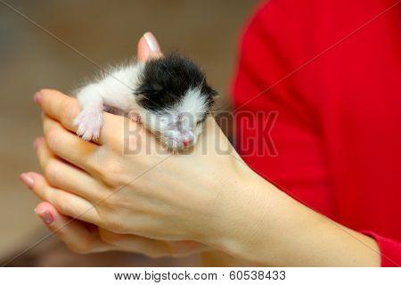 orphan kitten drinking milk from little bottle