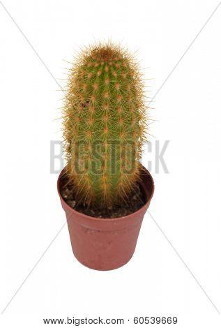 Thorny cactus plant isolated on white background