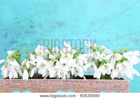 Beautiful snowdrops on blue background
