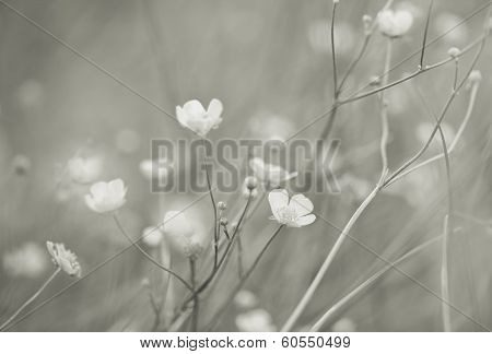 Dreamflowers,black and white photo