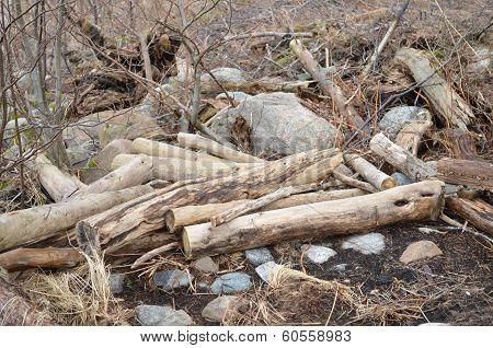 driwen timber
