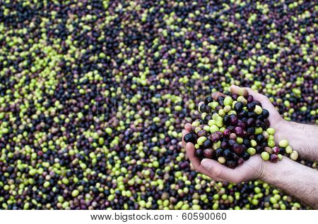 Olives and olives in hand
