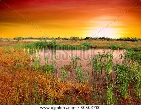Bog lake with sunset
