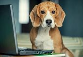 pic of working animal  - First steps in internet browsing  - JPG