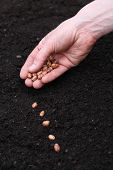 Planting Seeds In Soil