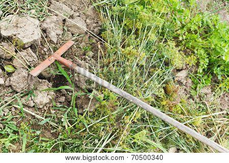 Collecting Cut Grass By Rake In Garden