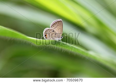 Brown Butterfly On Green Leaves.