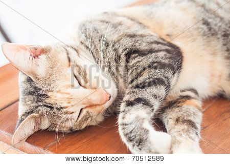 Siamese Cat Sleeping On Wooden Table