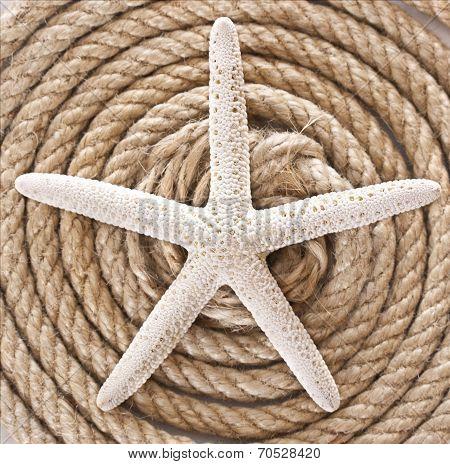 Starfish And Rope