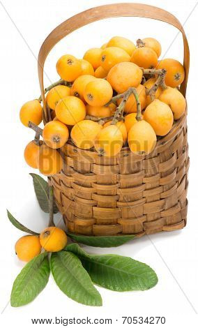 Loquat Fruits On Branch And In Basket
