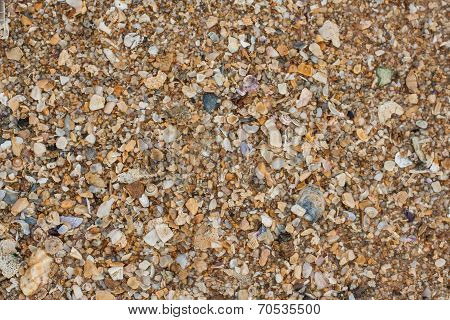 Sea Sand Texture Made Of Shell And Stone Pieces.