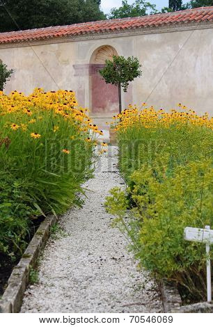Echinacea Flower Bed