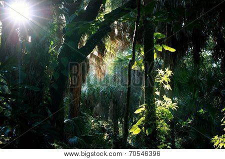 Shady Sunlit  Subtropical Forest Morning