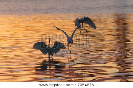 birds play in waterland