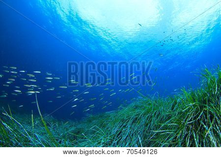 Fish and Sea Grass Underwater