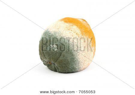 Moldy Rotten Orange