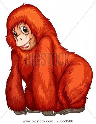 Illustration of an orangutan
