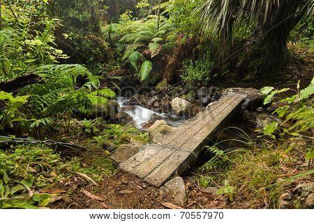 Foot Plank Bridge
