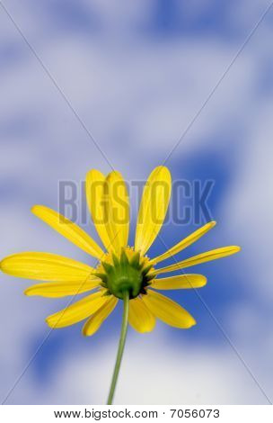 Yellow Flower and Cloudy Sky