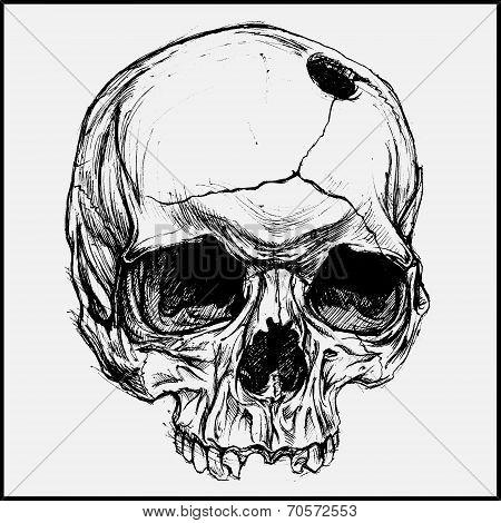 Skull Drawing